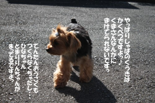 IMG_3067_20121107121836.jpg