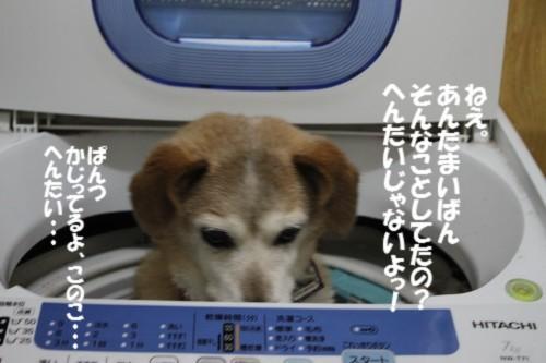 IMG_3134.jpg