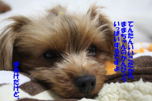 IMG_3181.jpg