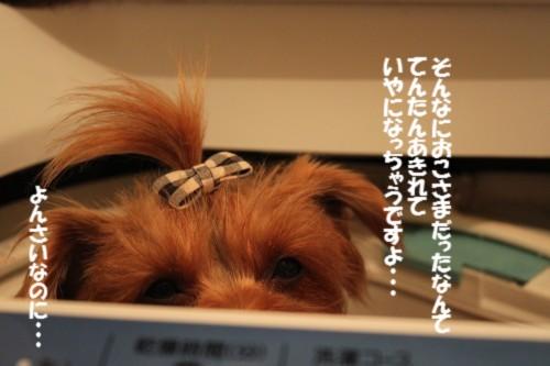 IMG_3920_20121209214453.jpg