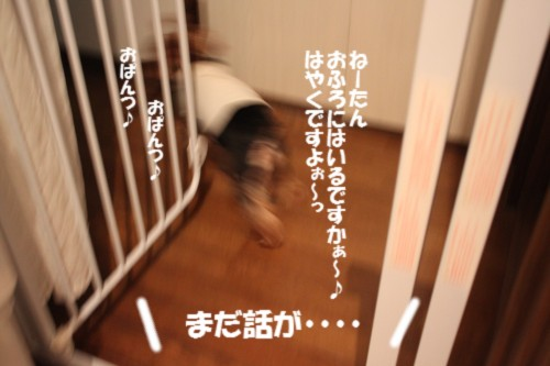 IMG_3929_20121209220003.jpg