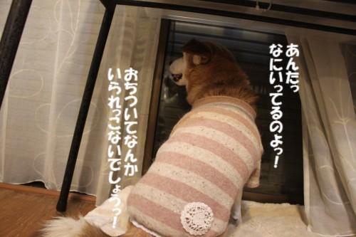 IMG_4037_20121213135819.jpg