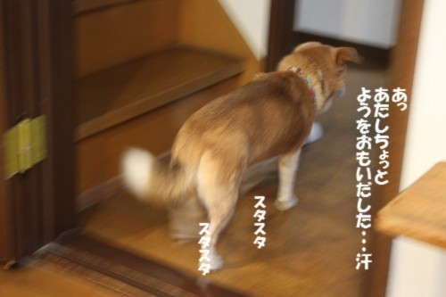 IMG_4093_20121217094939.jpg