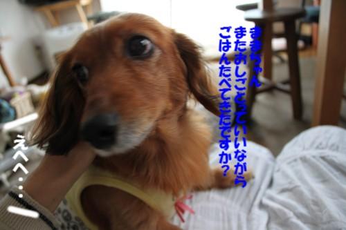IMG_4126_20121218145514.jpg