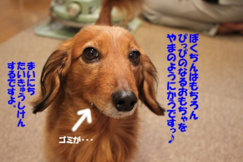 IMG_4382_20121229203651.jpg