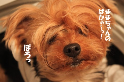 IMG_4657.jpg