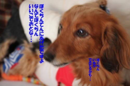 IMG_4688_20130113214510.jpg