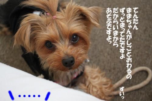 IMG_4747_20130117170710.jpg
