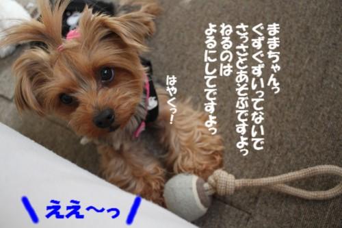 IMG_4749_20130117170711.jpg