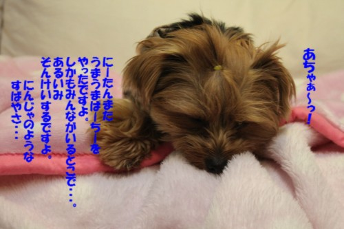 IMG_4802.jpg