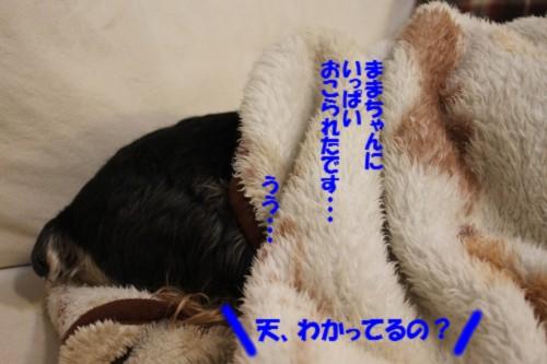 IMG_5674_20130301093712.jpg