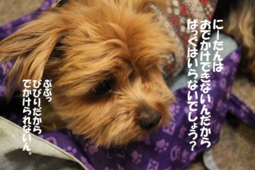 IMG_5941_20130312063341.jpg