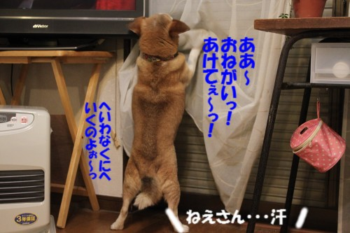 IMG_6181.jpg