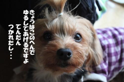 IMG_7203.jpg