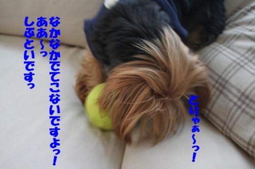 IMG_7936.jpg