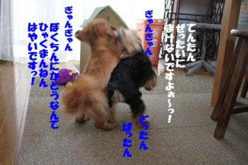 IMG_9058.jpg