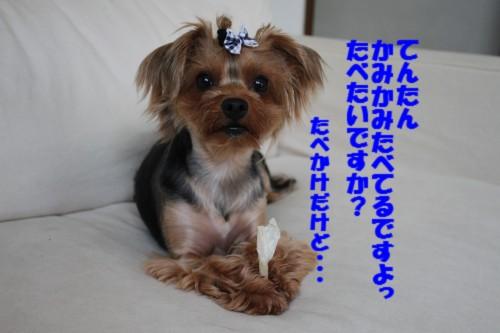 IMG_9761.jpg