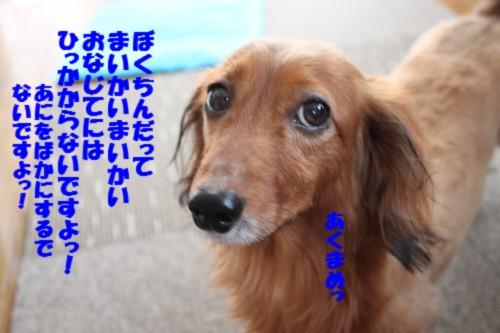 IMG_9768.jpg