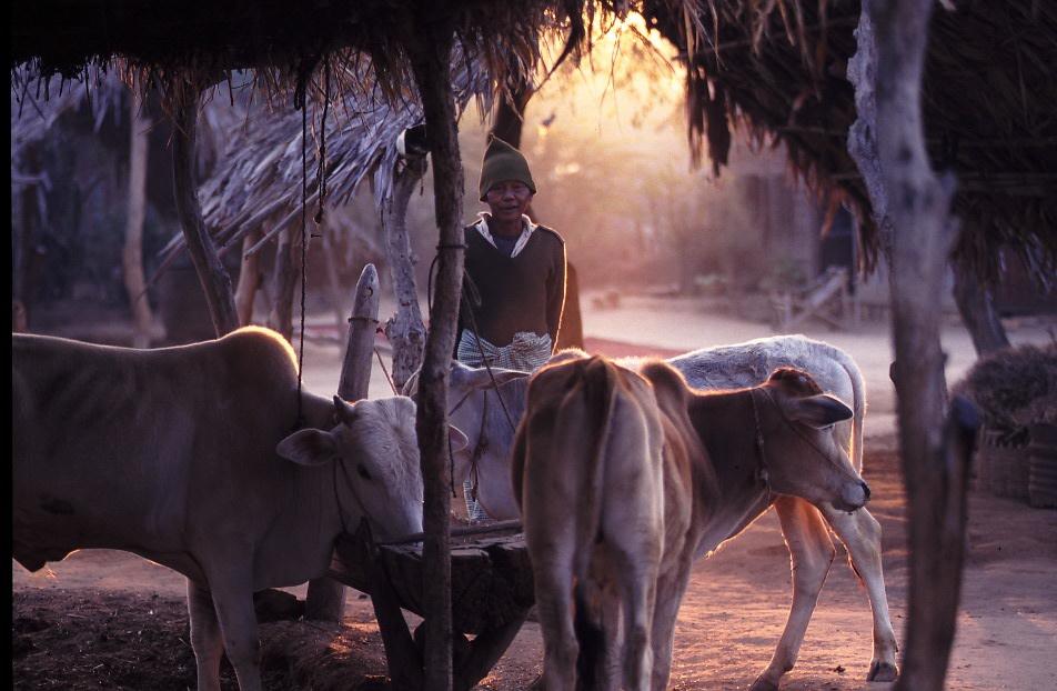 バカン近郊の村の朝