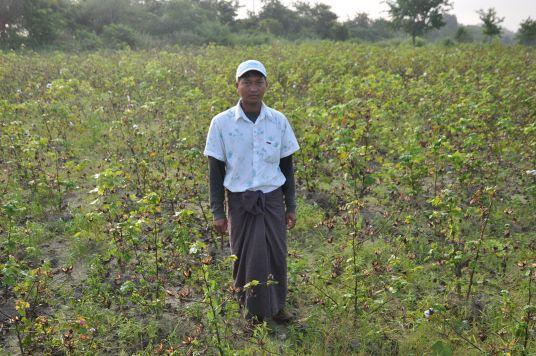 ザガイン コットン畑0 農家