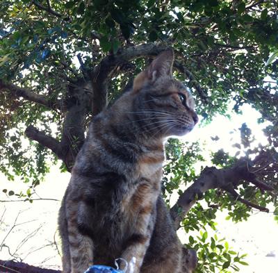 侯硐駅屋根猫