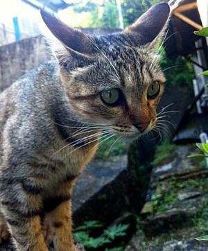 侯硐駅三番猫