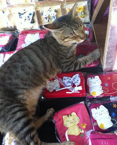 硐猫村店猫