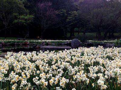 陽明山水仙池