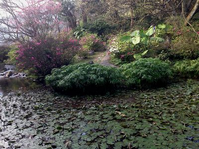陽明山別の池