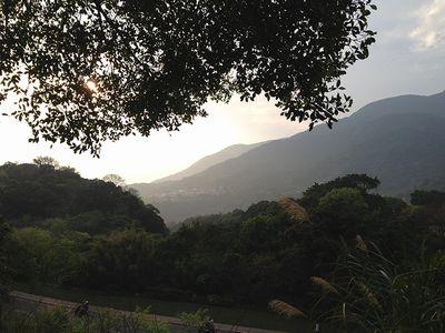 陽明山ススキ