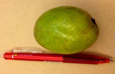マンゴー大きさ