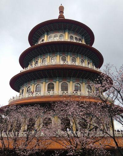 淡水天元宮塔と桜