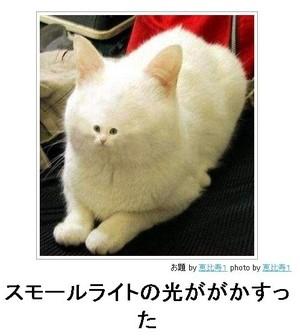 tc3_search_naver_jpCATAQH9P.jpg