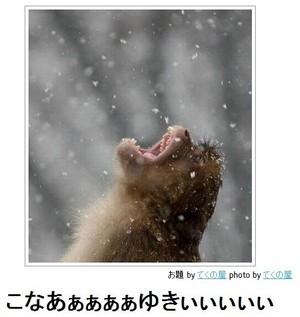 tc4_search_naver_jpCAP4QGCF.jpg