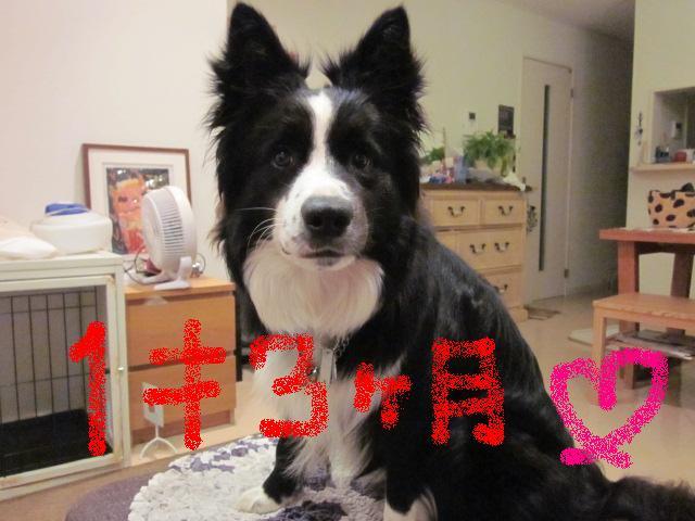 goro- 1sai3
