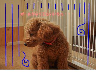 snap_odadogschool_20125218565.jpg