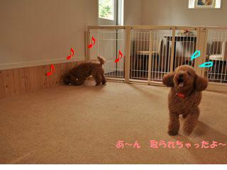 snap_odadogschool_20125219248.jpg