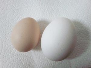 烏骨鶏卵2