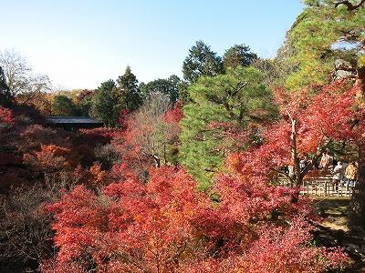 東福寺 (17)