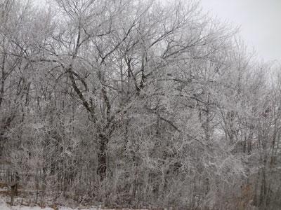 snow12101401.jpg