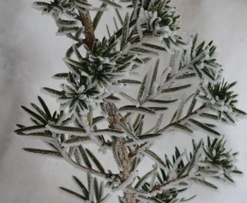 snow12101403.jpg