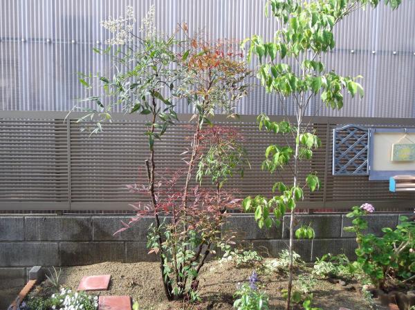 20120608ハナミズキ花壇