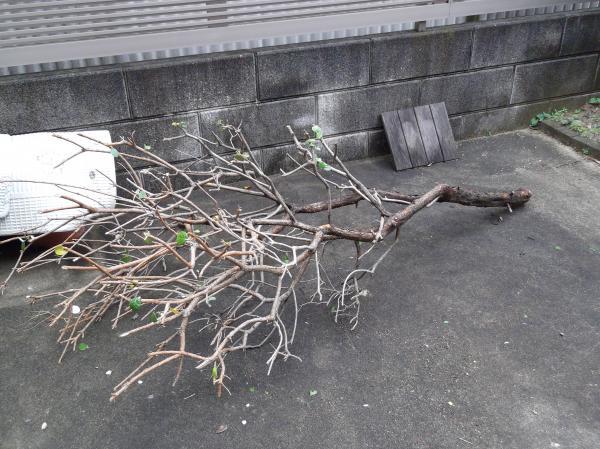 20120610抜いた木骨組み
