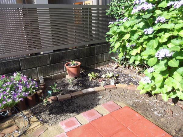 20120617今日の庭②
