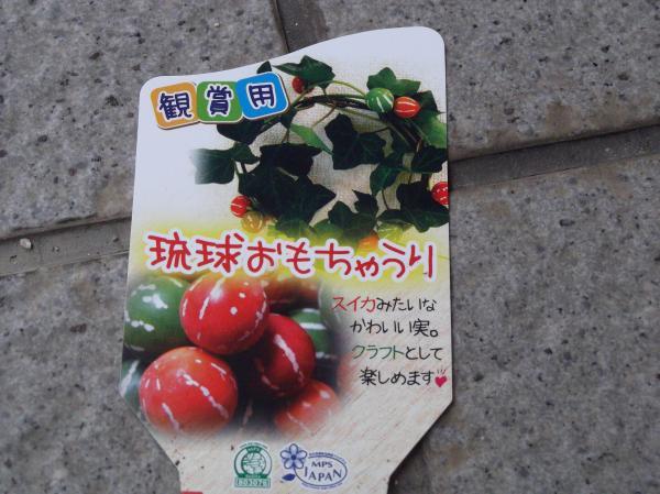 20120624琉球おもちゃうり②