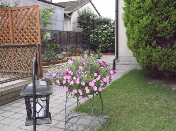20120625サフィニア