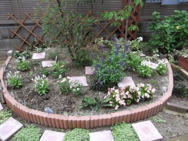 20120713ハナミズキ花壇
