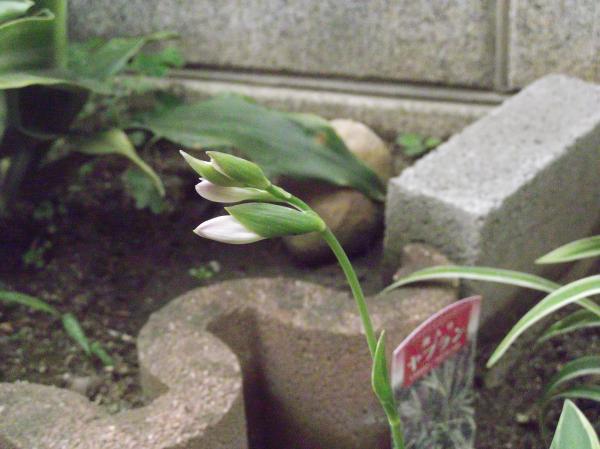 20120721シャルモン