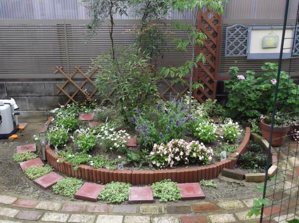 20120724ハナミズキ花壇