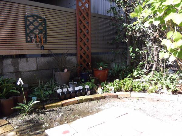 20120806シェード花壇